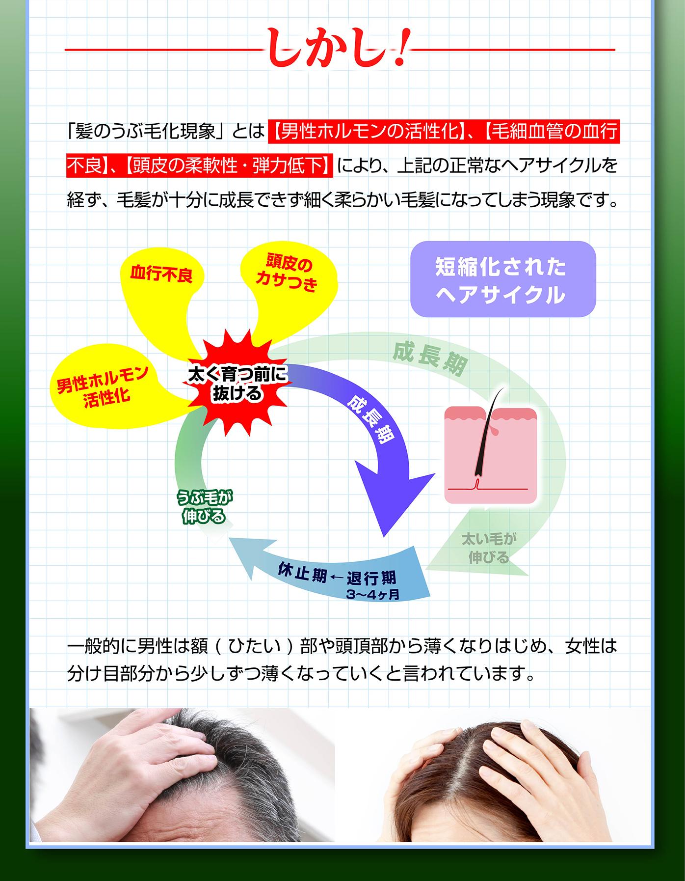 髪のうぶ毛化現象とはヘアサイクルが短縮化される現象